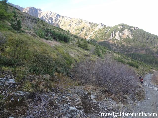The road taking to Iezerul lake - Rodnei mountains