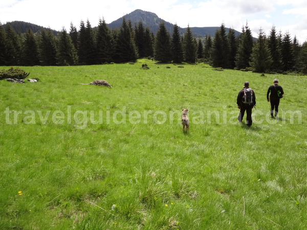 Glade near hill of the cross - Apuseni mountains