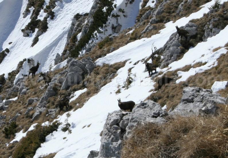 Piatra Craiului Mountains Hiking in Piatra Craiului