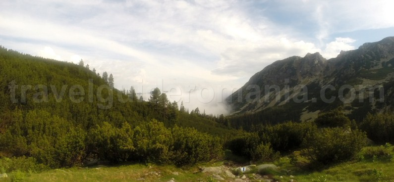 arolla pine trees (Pinus cembra) and juniper fields - Retezat mountains