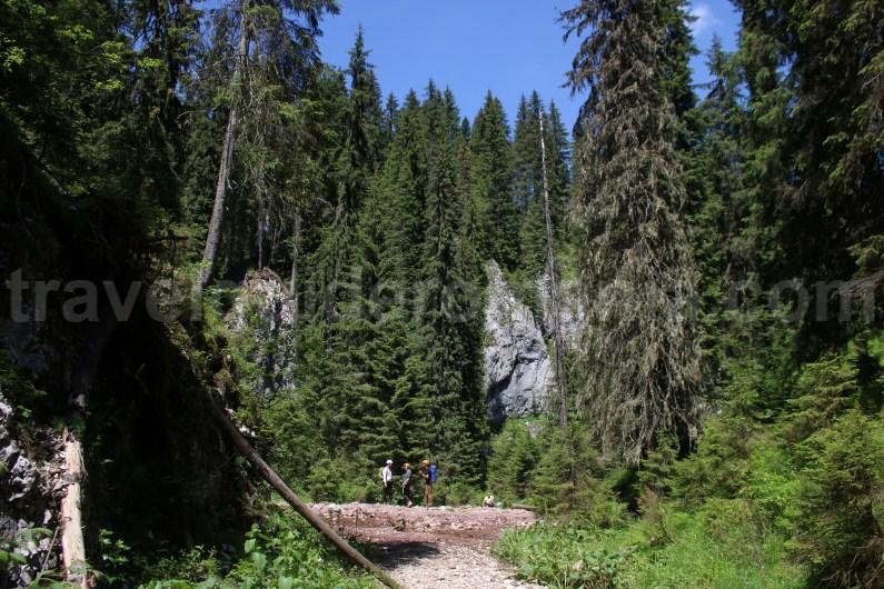 Rădeasa Glade - Apuseni natural Park