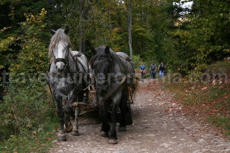 Rural lifestyle in Apuseni Mountains