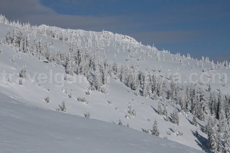 Guided winter trips in Apuseni mountains