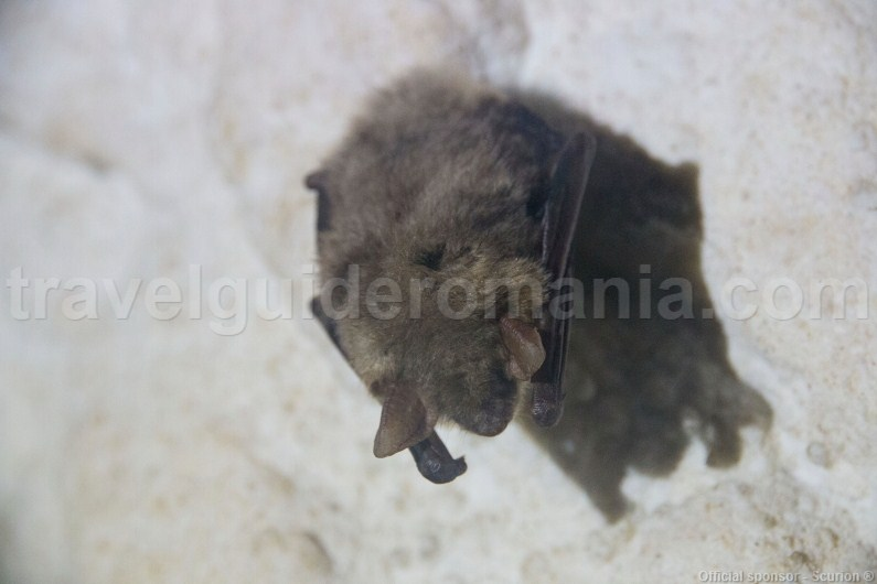 bats-in-romania-old-mans-cave