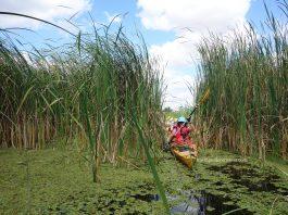 Danube Delta guided trips