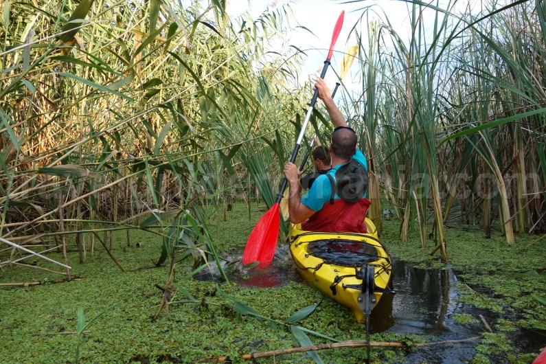 danube-delta-kayak-tours-romania