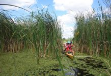 Danube Delta guided trips