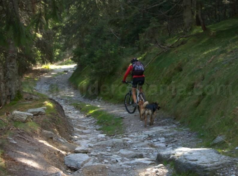 Mountain trips in Apuseni mountains