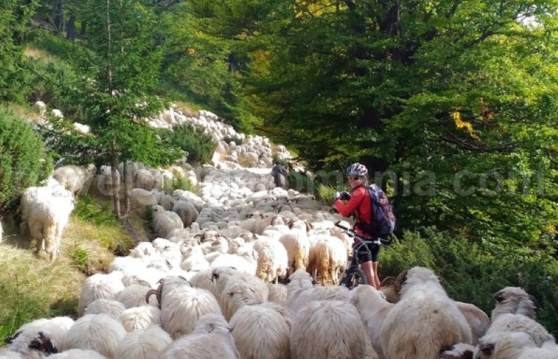 Mountain biking trails in Apuseni mountains