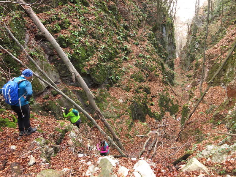 Crisul Repede defile balnaca suncuius Padurea Craiului hodoaba