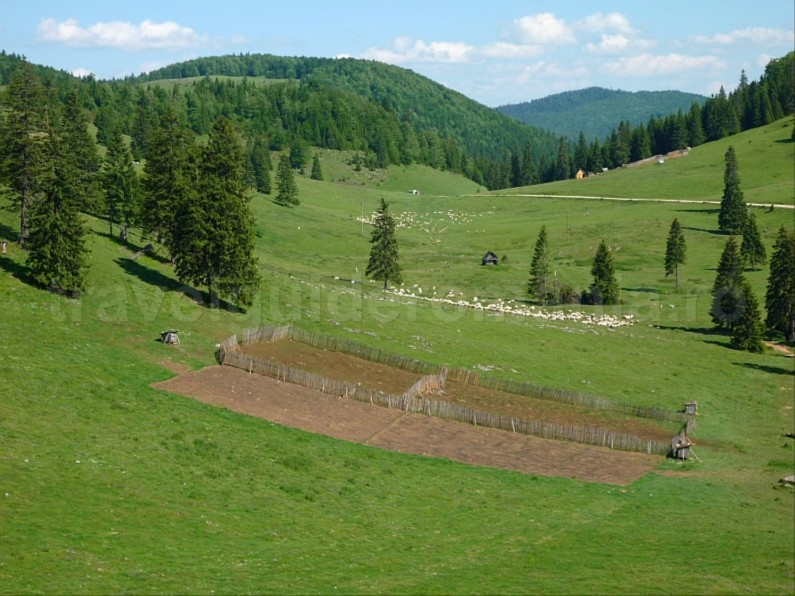 Padis Apuseni mountains balileasa