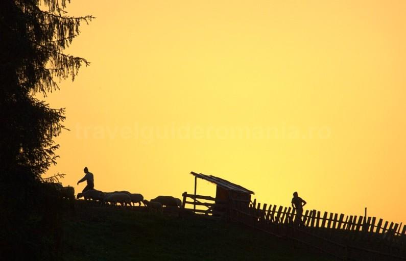 Padis Apuseni natural park romania sheepfold