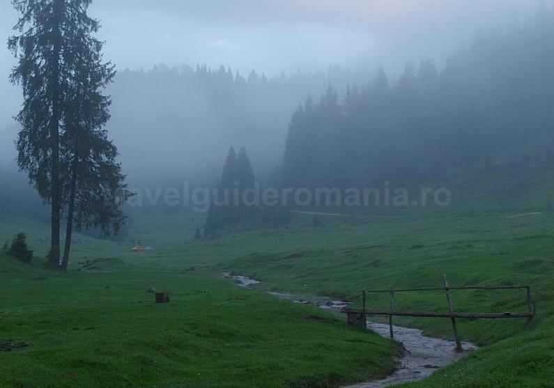 glavoi glade Padis Apuseni mountains