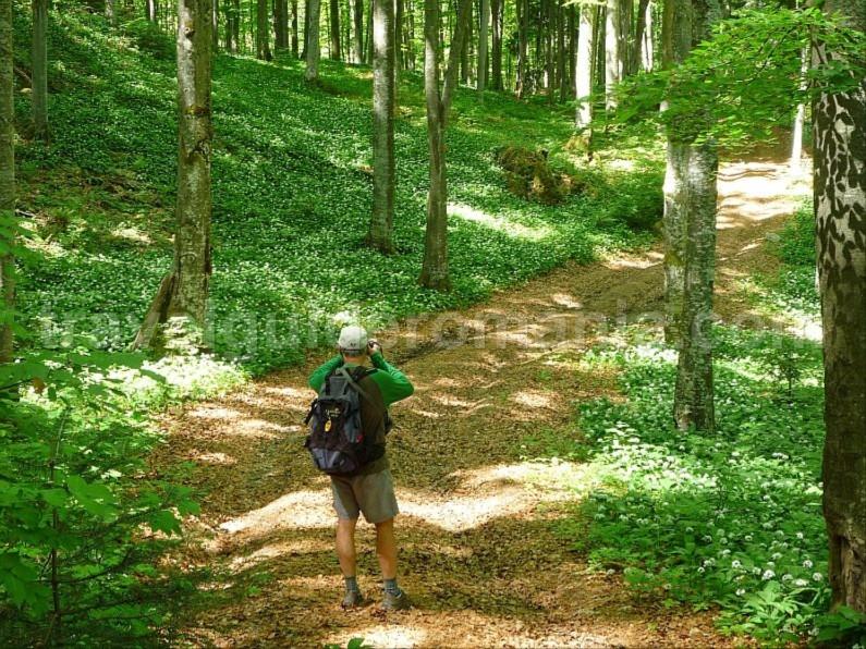 biking bratcutei valley mtb Padurea Craiului Apuseni