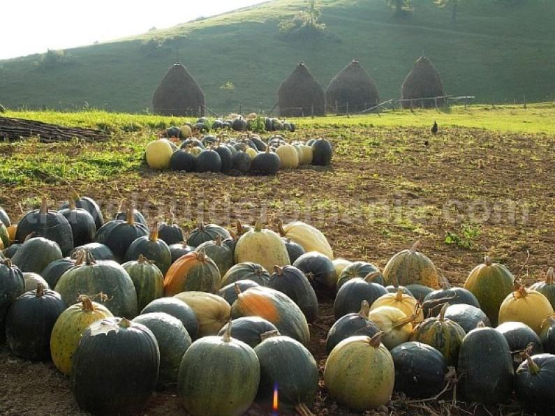hay stacks pumpkins Padurea Craiului Apuseni