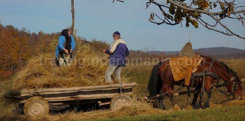 hay stacks rosia Padurea Craiului Apuseni