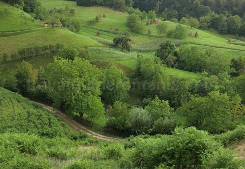 haystacks Rosia Padurea Craiului Apuseni