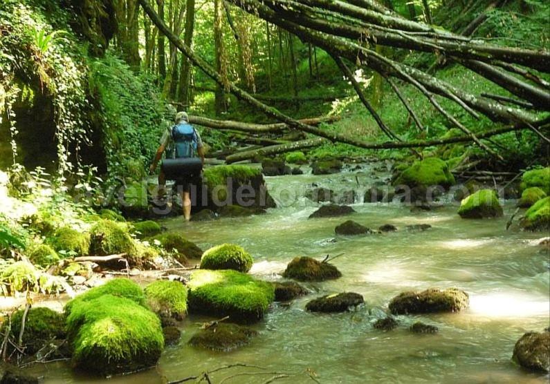 hiking lazuri Padurea Craiului Apuseni