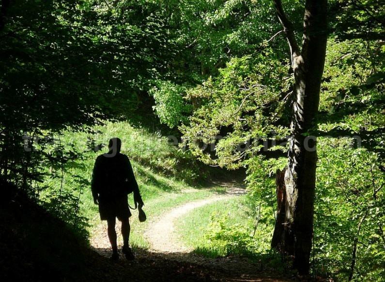 hiking valea bratcutei mtb Padurea Craiului Apuseni