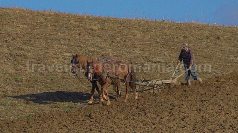 iron plough Rosia Padurea Craiului Apuseni