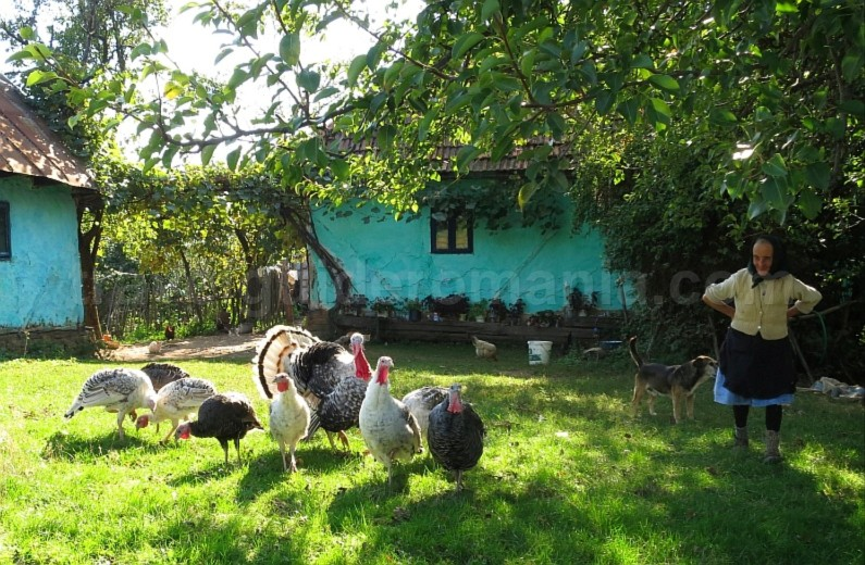 runcuri hamlet rosia Padurea Craiului Apuseni (2)
