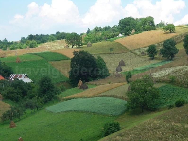 traditional agriculture runcuri rosia Padurea Craiului Apuseni