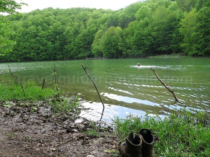 vida lake Padurea Craiului Apuseni