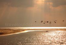 Danube Delta Nature Reserve