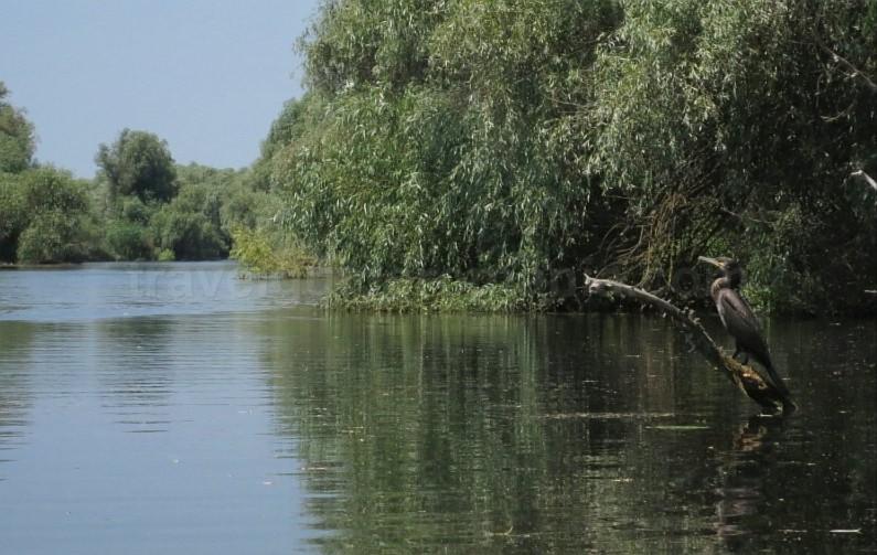 Danube Delta Nature Reserve cormorants