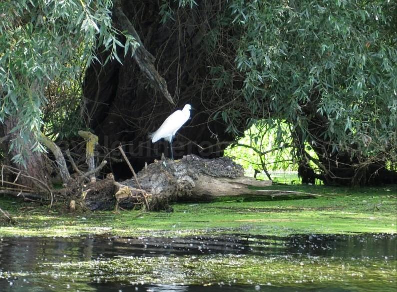 Danube Delta Nature Reserve egret