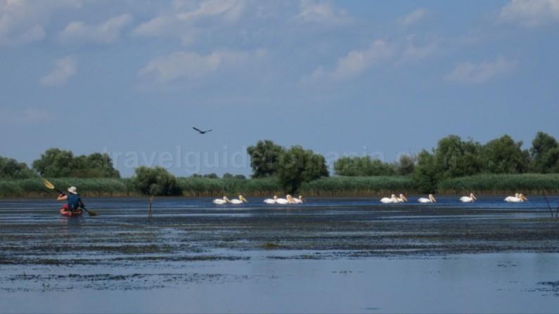Danube Delta Nature Reserve kayak pelicans