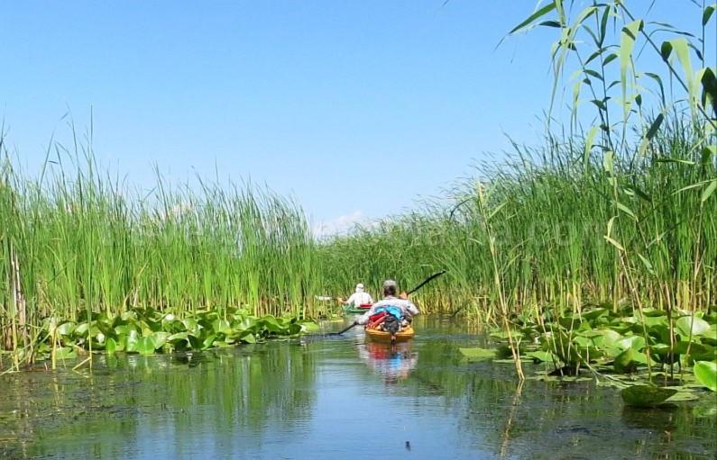 Danube Delta Nature Reserve kayak reed