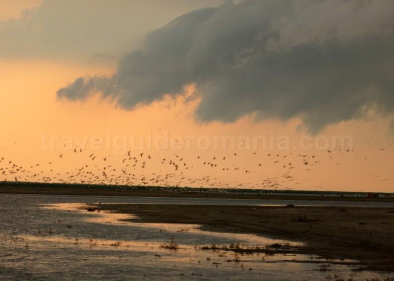 Danube Delta Nature Reserve kayak sacalin peninsula pelicans