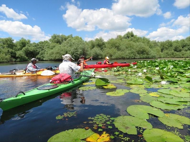 Danube Delta Nature Reserve kayak water lilies