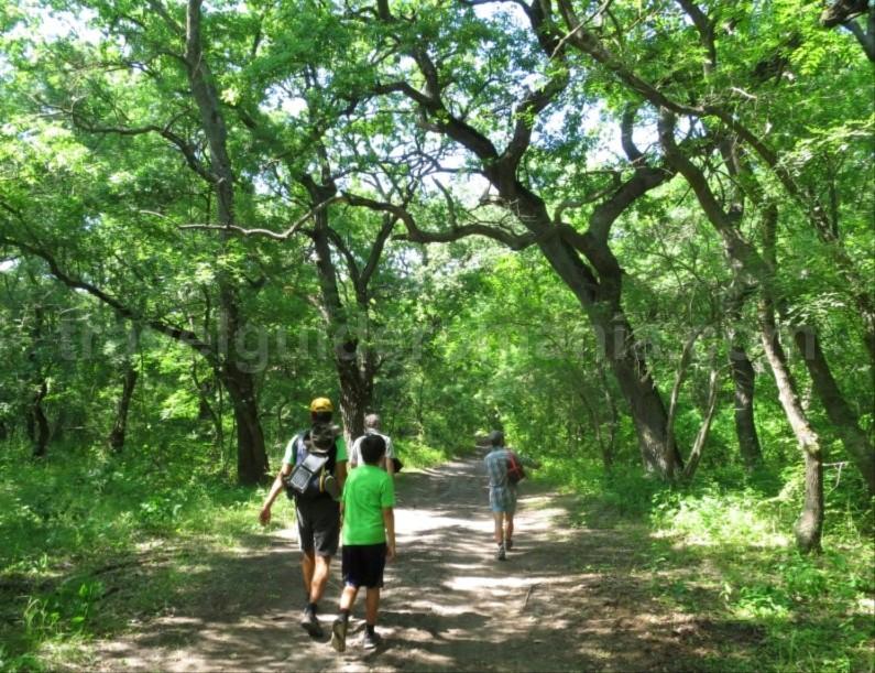 Danube Delta Nature Reserve letea forest
