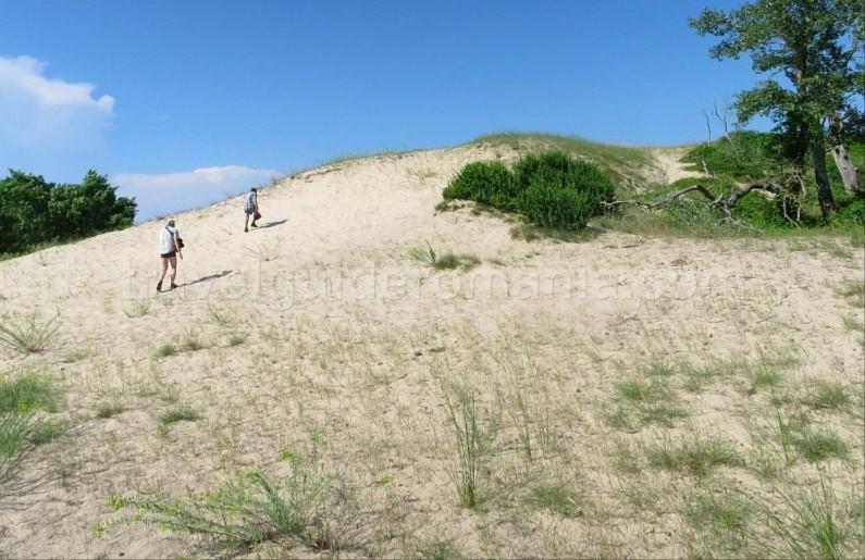 Danube Delta Nature Reserve letea sand dunes