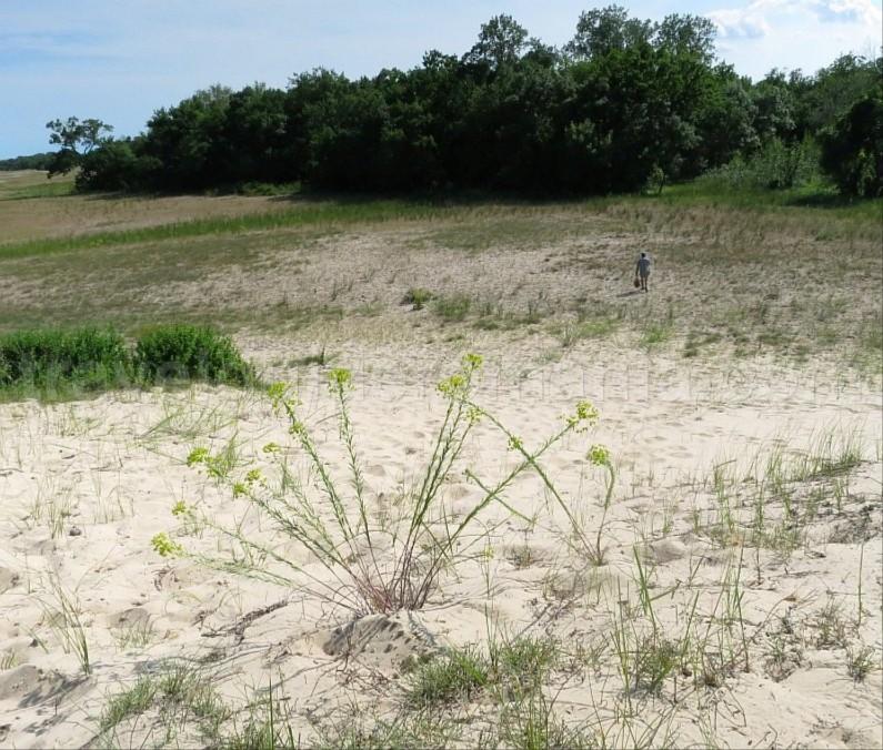 Danube Delta Nature Reserve sand dunes Letea