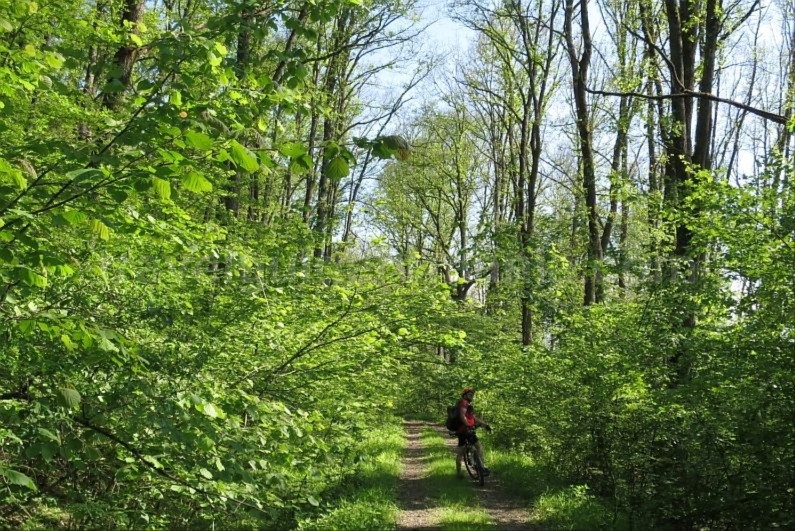 Ecotourism destination Mara – Cosau – Creasta Cocosului from Maramures cycling Craiasca forest
