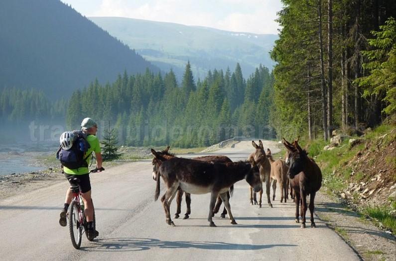 latoritei mountains romania transalpina road mountain-biking