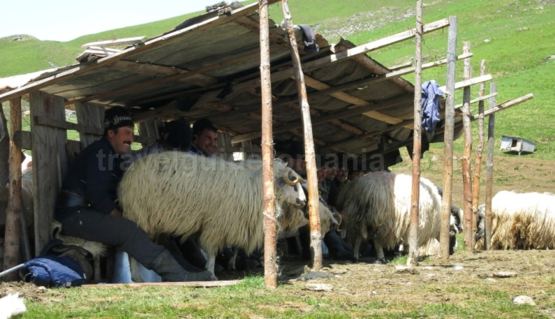 Ecoturism-Destination-Tara-Dornelor-suhard-sheepfold