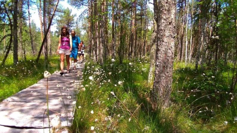 Ecoturism-Destination-Tara-Dornelor-tinovul-mare