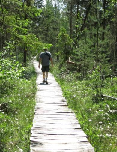 Poiana-Stampei-Ecoturism-Destination-Tara-Dornelor