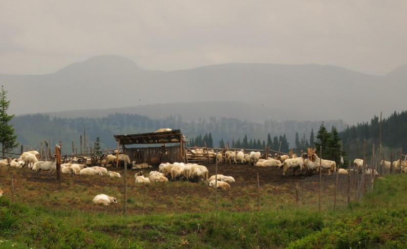 sheepfold-Ecoturism-Destination-Tara-Dornelor