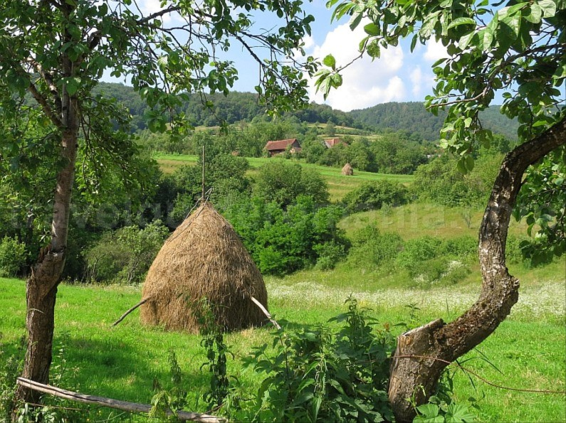 The Vaşcău Karst Plateau– The Apuseni Mountains hay