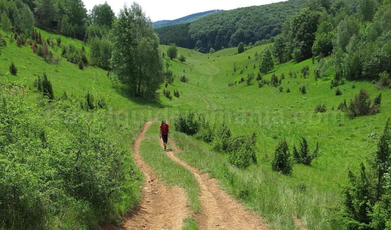 The Vascau Karst Plateau – The Apuseni Mountains doline