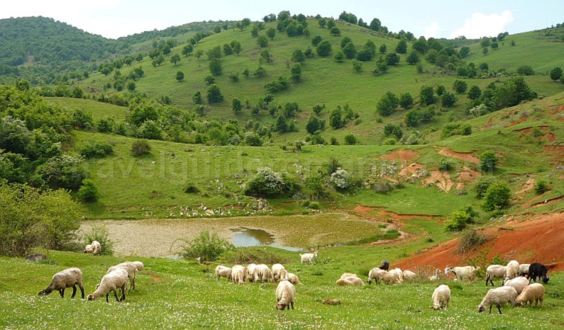The Vascau Karst Plateau – The Apuseni Mountains ghib