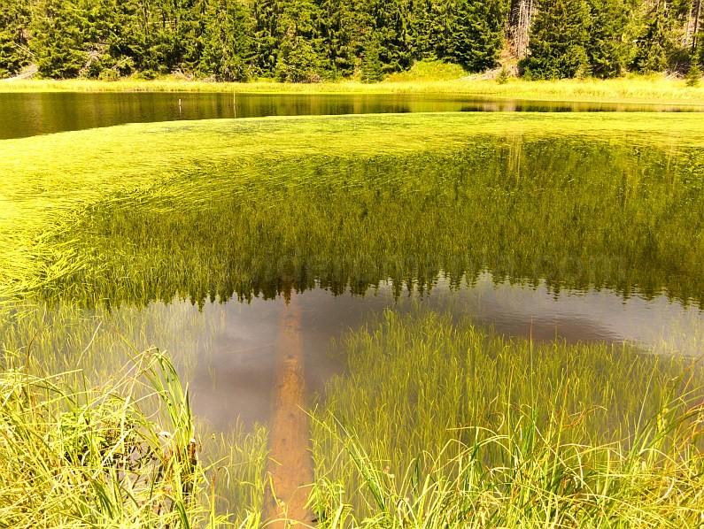 transalpina latoritei lake