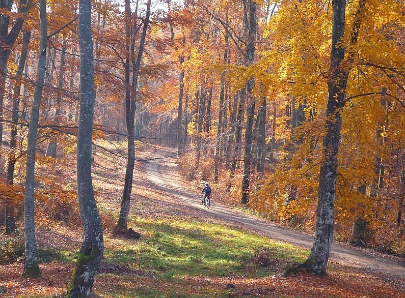 Pădurea Craiului Roșia